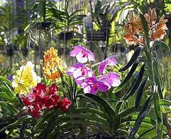Orchids in Puket